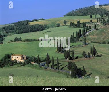 Italie, Toscane, Sienne, colline paysage, route de campagne à l'extérieur, l'été, Toscana, champ paysage, rue, ferme, Banque D'Images