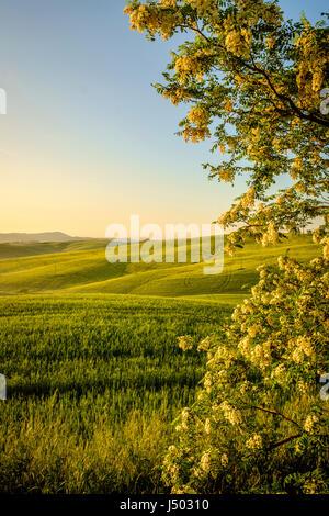 Val d'Orcia en Toscane l'Italie province Europe Banque D'Images