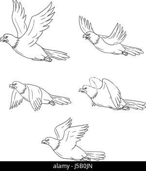 Collection Illustrations Des Aigle Avec Voler D'un Ailes RRTzcUnx