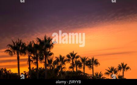 Palmiers en silhouette contre un ciel noir et orange, Elviria, Marbella. Banque D'Images