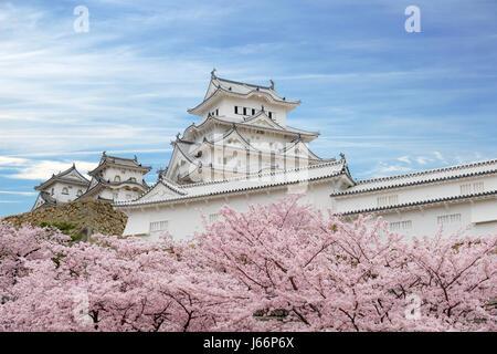 Fleur de cerisier fleurs et château de Himeji à Himeji, préfecture de Hyogo, Japon Banque D'Images