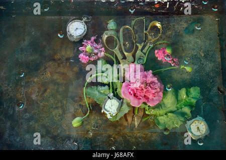 Encore l'art la vie avec deux paires de ciseaux couché à côté d'entouré de fleurs roses de coquelicots de montagne, Banque D'Images