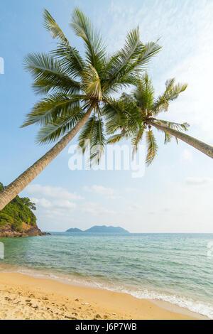 Palmiers sur la plage tropicale sur l'île de Koh Chang en Thaïlande Banque D'Images