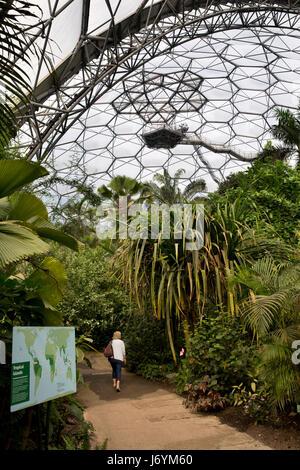 UK, Cornwall, St Austell, Bodelva, Eden Project, le biome de la forêt tropicale, les visiteurs sur le chemin entre Banque D'Images