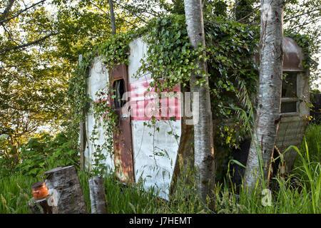 Vintage Travel Trailer Tour-une-maison, avec l'espagnol qui empiètent le lierre, se reposant sous un bosquet d'aulnes. Banque D'Images