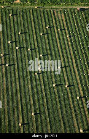 Une vue aérienne de la luzerne en balles en attente d'être transportées et empilés. Banque D'Images