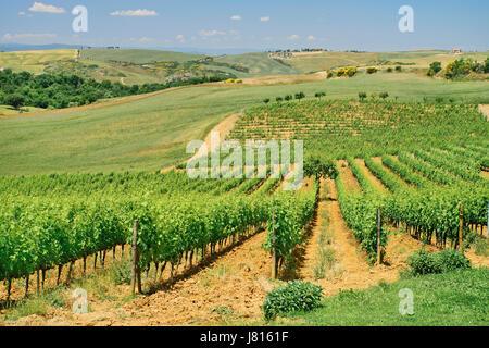 Italie, Toscane, San Quirico d'Orcia, l'Agriturismo Bagnaia Hébergement ferme et vignoble avec collines toscanes Banque D'Images