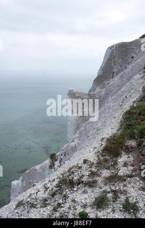 Møns Klint falaises de craie, l'île de Møn, Danemark, Europe