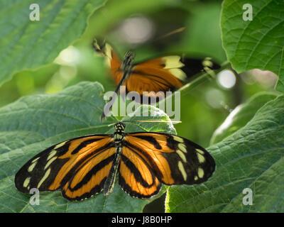 Butterfly reposant sur feuille avec d'autres dans l'arrière-plan Banque D'Images