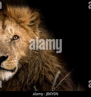 Belle faune Africaine Banque D'Images