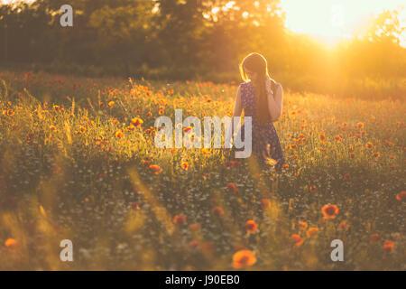 Femme au champ de coquelicots coucher de soleil d'été Banque D'Images