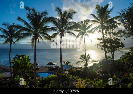 Palmiers en rétroéclairage sur Niue, Pacifique, Pacifique Sud