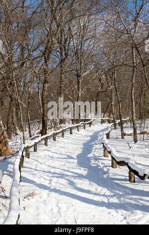 Une piste vide des courbes dans la distance, dans un quartier pittoresque matin vue sur les bois de Central Park Banque D'Images