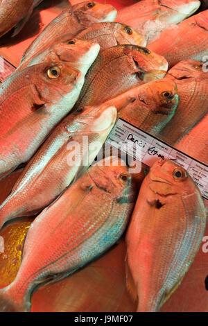 Denci ou dorade poisson frais pour la vente sur un stand à Marsaxlokk Malte Banque D'Images