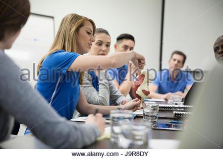 Les physiothérapeutes avec le modèle de la formation dans la salle de conférence réunion Banque D'Images