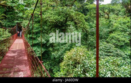 Pont en forêt tropicale de Monteverde Banque D'Images