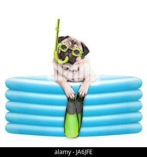 Funny summerly chien pug avec lunettes, tuba et palmes en piscine gonflable, isolé sur fond blanc Banque D'Images