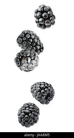 Les baies isolées. Cinq fruits blackberry chute isolé sur fond blanc avec clipping path Banque D'Images