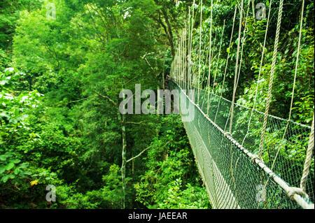 Pont de corde suspendu dans Rainforest, Taman Negara, Malaisie Banque D'Images