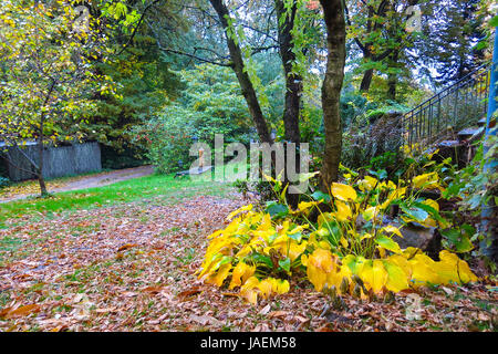 Allemagne, Hambourg, forêt d'automne. Impression d'automne de la Saxe, près de Hambourg, Allemagne Banque D'Images