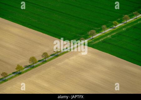Route bordée d'entre les champs, Düsseldorf, Rhénanie du Nord-Westphalie, Münster, Allemagne Banque D'Images