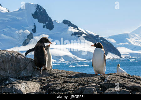 Manchots au Paradise Harbour, l'Antarctique Banque D'Images