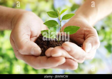 Prendre soin des nouveaux aménagements hands holding nouvelle vie plant Banque D'Images