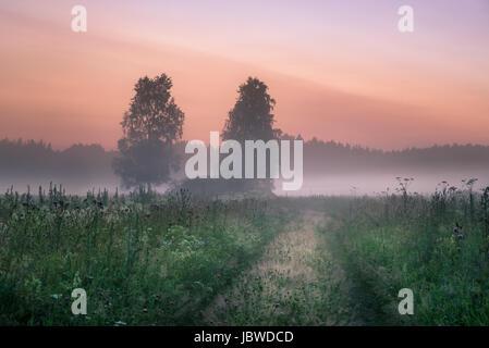 Paysage avec la brume et le brouillard à une nuit d'été dans le nord de l'Europe Banque D'Images