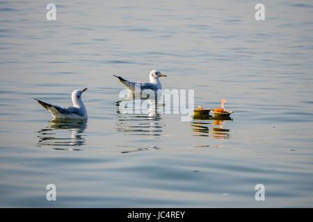 Deux mouettes nagent à côté de Deepaks flottant dans le fleuve saint Ganges Banque D'Images