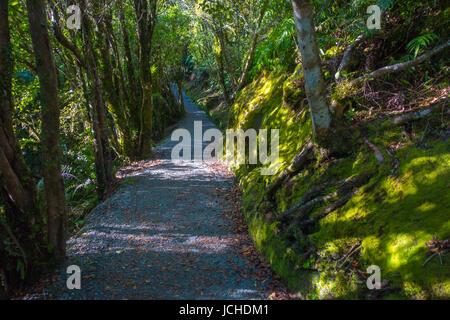 Un sentier à travers une forêt tropicale luxuriante. Franz Josef Glacier National Park, New Zealand. Banque D'Images