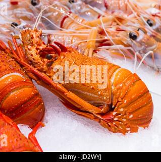 Le homard à la vente à Sydney Fish Market, Pyrmont, Sydney, Australie. Banque D'Images