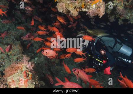 21 mars 2017 - Femmes scuba diver regardez sur banc de poissons (Priacanthus hamrur obèse commun) dans la grotte, Banque D'Images