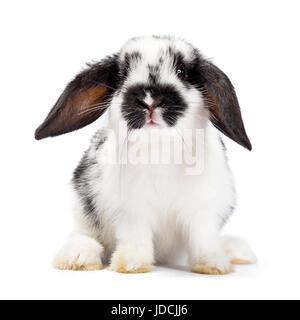 Noir et blanc lapin assis bébé isolé sur fond blanc Banque D'Images