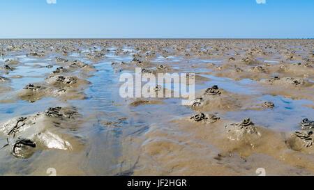 Motif de vase avec des moulages réalisés par des lugworms à marée basse sur la mer de Wadden, Pays-Bas