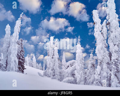 L'accumulation de neige sur les arbres. Mt. Rainier National Park, Washington Banque D'Images