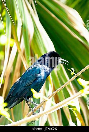 Portrait de l'oiseau Banque D'Images