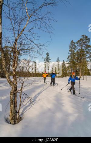 Ski de fond, Laponie, Finlande Banque D'Images