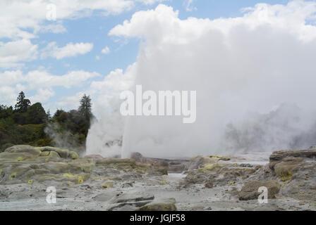 Pohutu Geyser Te Puia te réserve thermale de Whakarewarewa Valley New Zealand Banque D'Images