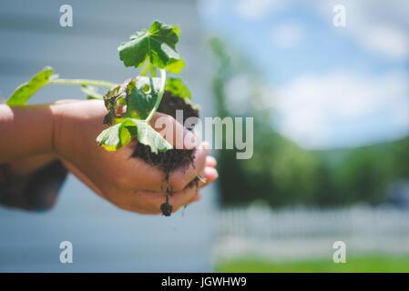 Un enfant tenir une plante avec un sol sous elle.
