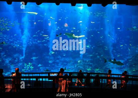 Les touristes à S.E.A. Aquarium. L'île de Sentosa. Singapour. Singapour.
