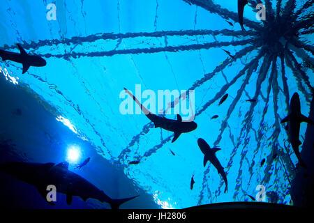 Les touristes à S.E.A. Aquarium. Les requins. L'île de Sentosa. Singapour. Singapour.