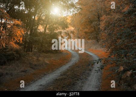 Autumn Forest Road Banque D'Images