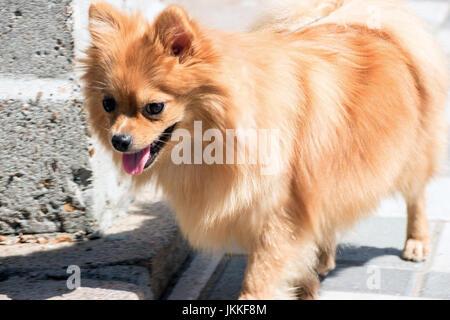 Portrait d'un petit chien Banque D'Images