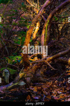 Automne couleur image extérieure de forest Underwood avec le bois et les feuilles, une impression d'automne Banque D'Images