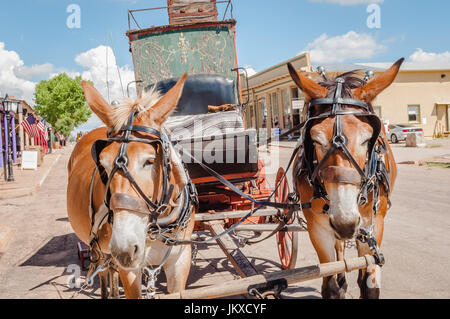 Mules tirez stagecoach sur la rue principale de Tombstone en Arizona