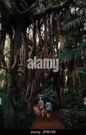 Couple de touristes suivez le chemin dans la jungle en Ara Loro parc luxuriant et verdoyant avec la végétation. Banque D'Images