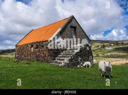 Ancienne grange en pierre avec toiture Orange et le pâturage des moutons; île de Skye, Écosse