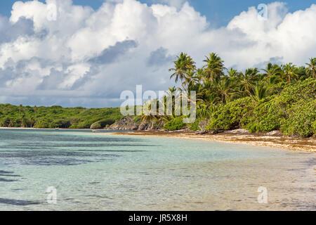 Belle plage des Caraïbes exotiques avec des palmiers en Martinique (Anse Michel)