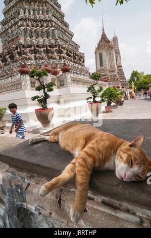 Chat posant dans les motifs de la Wat Arun temple, sur la rivière Chao Phraya. Yai district, Bangkok, Thaïlande Banque D'Images