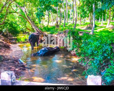 Troupeau d'éléphants dans environnement naturel au Sri Lanka près de Pinnawella Banque D'Images